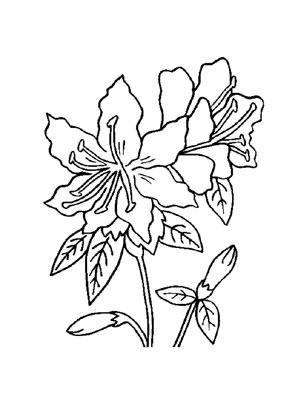 Ausmalbilder Rhododendron  Blumen Malvorlagen ausmalen