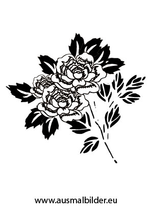 Ausmalbilder Rosen  Blumen Malvorlagen ausmalen