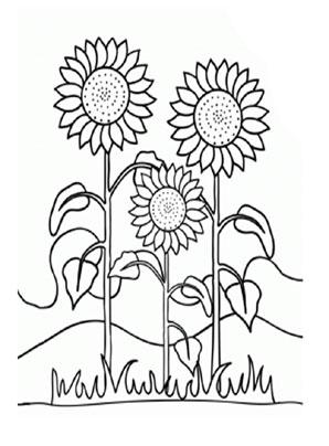 Ausmalbild Sonnenblume Zum Ausdrucken