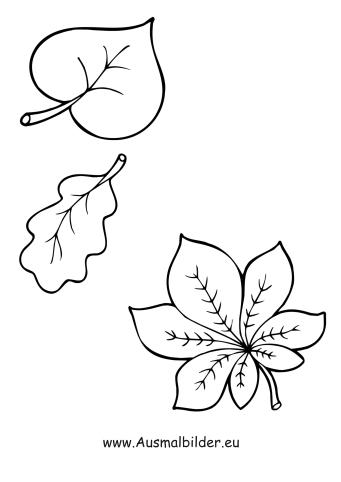 Ausmalbilder Laubblätter - Herbst Malvorlagen