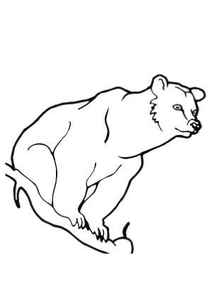 Ausmalbilder Aufmerksamer Bär - Bären Malvorlagen