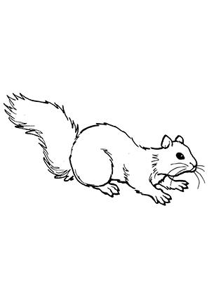 Ausmalbild Eichhörnchen beim Kriechen zum Ausdrucken