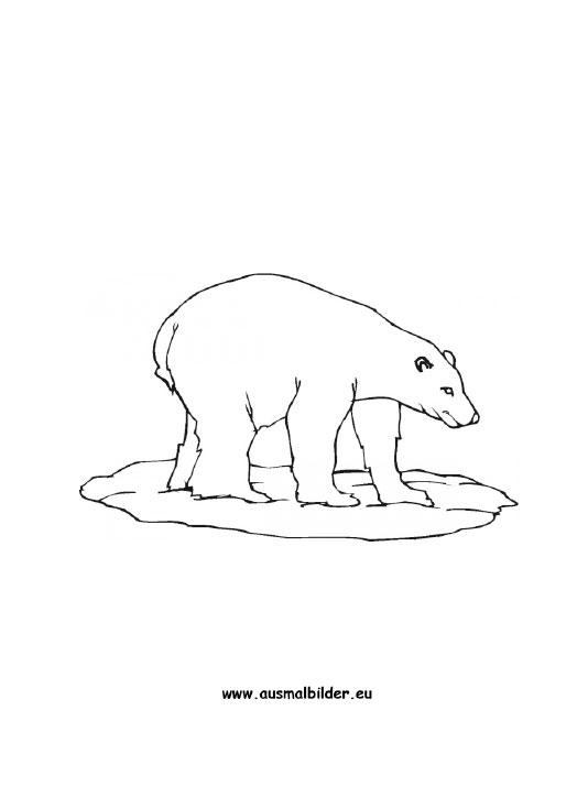 Ausmalbilder Eisbär - Eisbären Malvorlagen