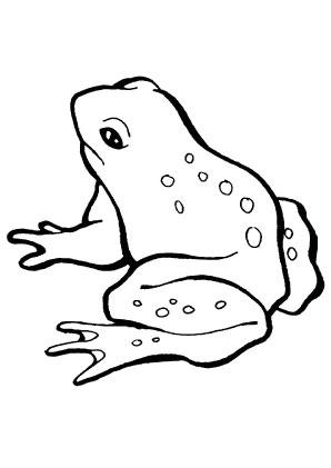 Ausmalbilder Junger Frosch - Frösche Malvorlagen