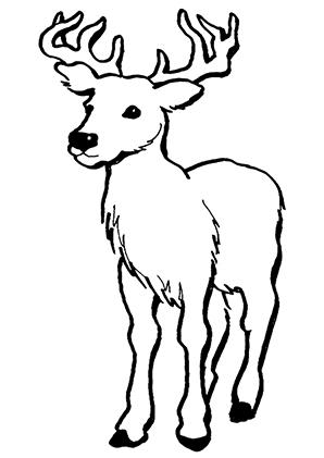 Ausmalbilder Junger Hirsch - Hirsche Malvorlagen