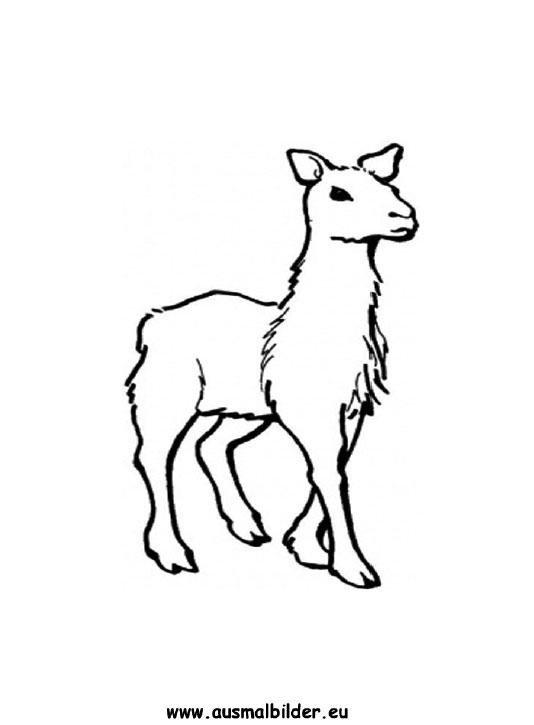 Ausmalbilder Lama  Lamas Malvorlagen