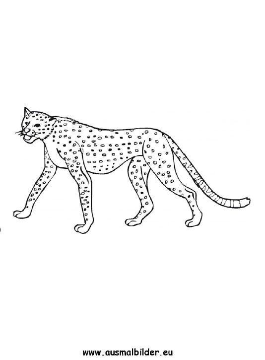 Ausmalbilder leopard - leoparden Malvorlagen