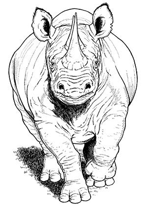Ausmalbilder Nashorn Frontansicht  Nashrner Malvorlagen