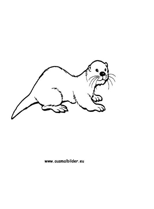 Ausmalbilder Otter Otter Malvorlagen