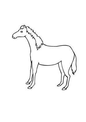 Ausmalbilder Scheüs Fohlen - Pferde Malvorlagen