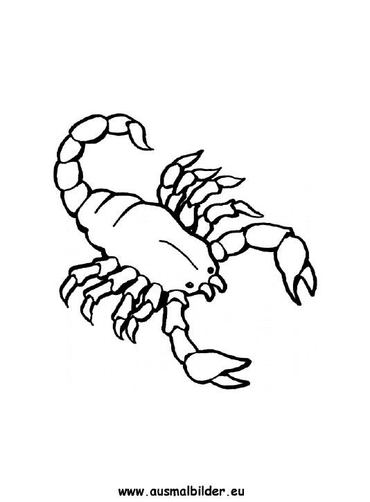 Ausmalbilder Skorpion Skorpione Malvorlagen