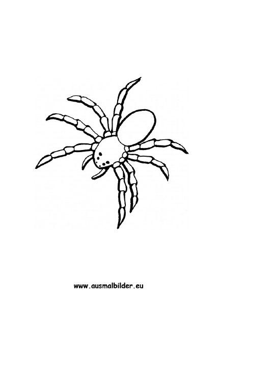 Ausmalbilder Spinne  Spinnen Malvorlagen