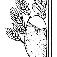 Brot Ausmalbilder & Malvorlagen   100 KOSTENLOS