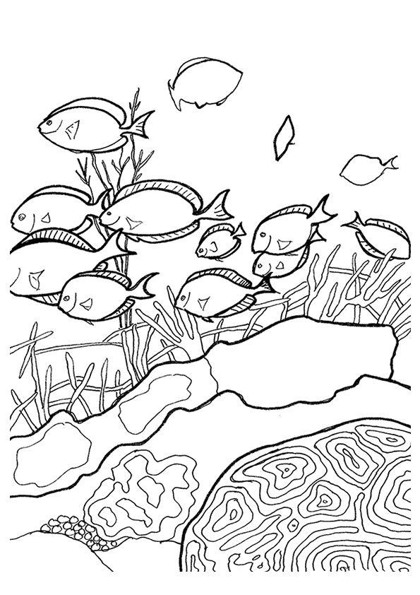 Koralle Ausmalbilder & Malvorlagen - 100% KOSTENLOS