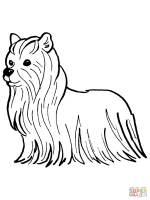 Yorkshire Terrier Ausmalbilder & Malvorlagen   100 KOSTENLOS