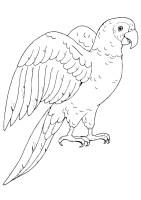 Papagei Ausmalbilder & Malvorlagen   100 KOSTENLOS