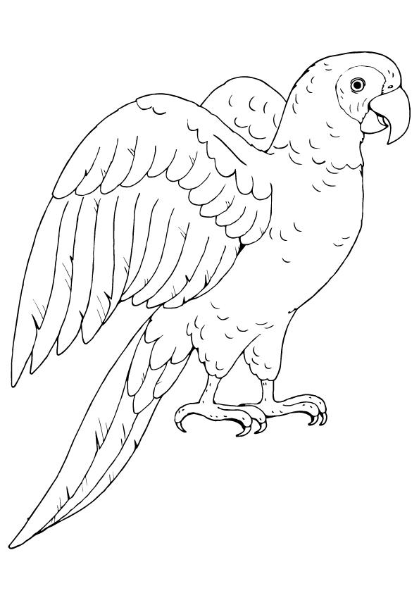 Papagei Ausmalbilder & Malvorlagen - 100% KOSTENLOS