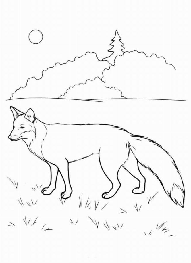 Ausmalbilder für Kinder Fuchs 1
