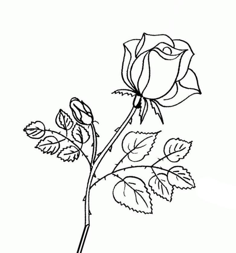 Ausmalbilder für Kinder Rosen 11