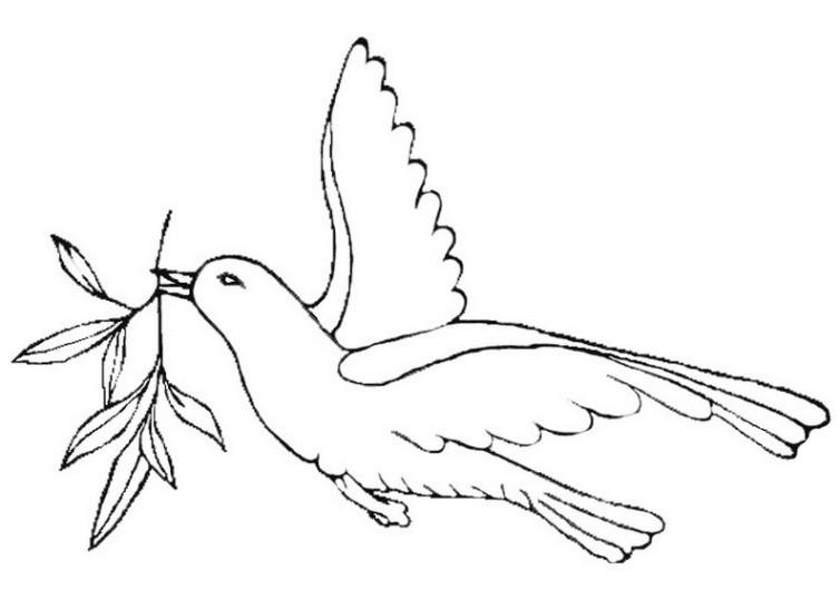 Ausmalbilder für Kinder Taube 5