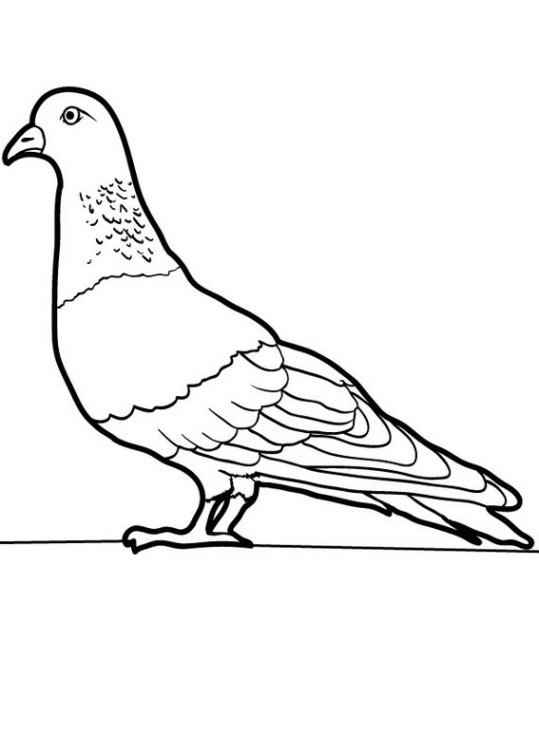 Ausmalbilder für Kinder Taube 9