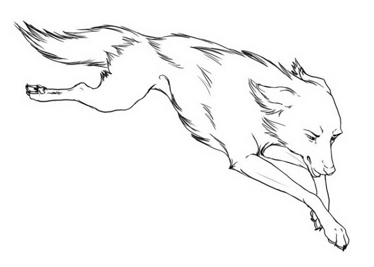 Heulender Wolf Malvorlage