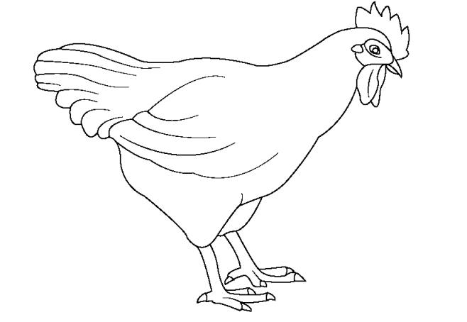 Ausmalbilder für Kinder Huhn Henne 9