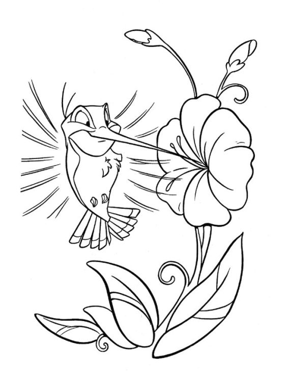 Ausmalbilder für Kinder Kolibri 8