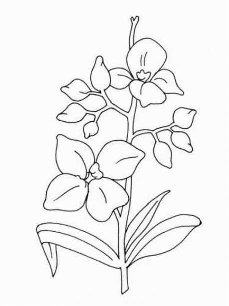 Ausmalbilder für Kinder Orchidee 3