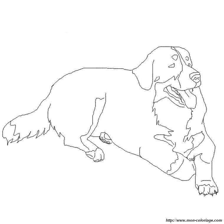 Ausmalbilder Hund bild berner sennenhund