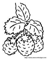 Ausmalbilder Frucht oder Obst, bild himbeeren