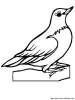 Ausmalbilder Vögel, bild rotkehlchen