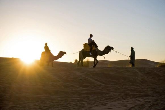 Kamele im Desert Luxury Camp