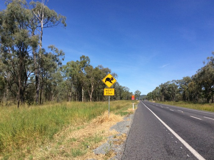 Koalas entlang der Strasse