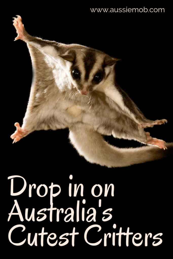 Drop in on Australia's Cutest Animals