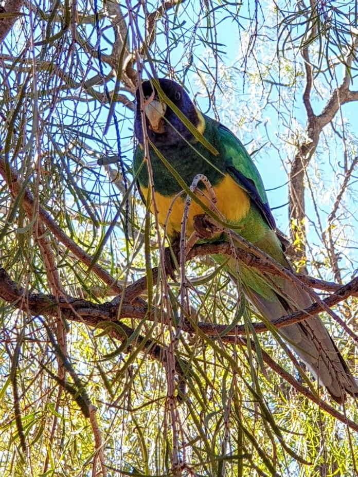 Vida silvestre y aves en Alice Springs