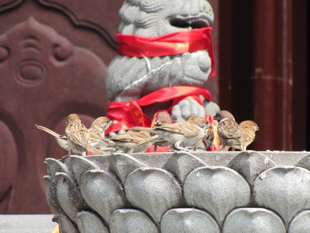 Birds bathing at the Jade Buddha Temple