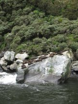 Seal Rock, Milford Sound