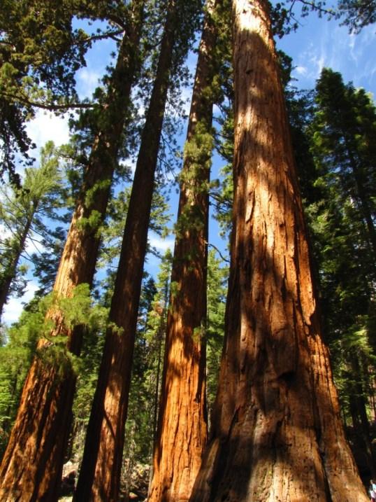 wawona mariposa pines