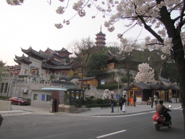 The cherry blossoms in bloom near Ji Ming Temple.