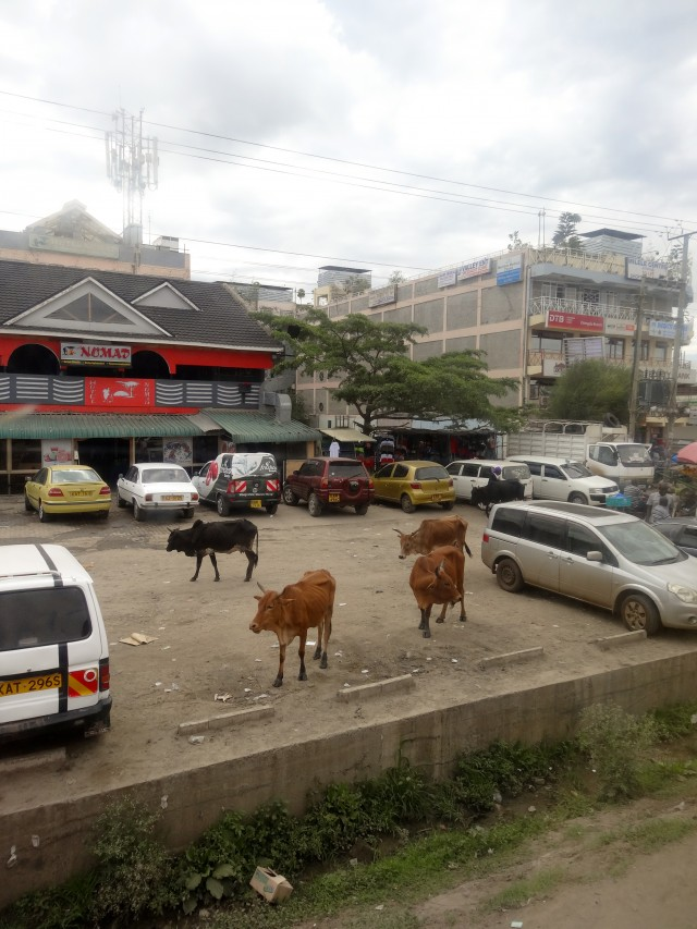 Livestock in many Tanzanian villages wanders aimlessly through the heart of the town.
