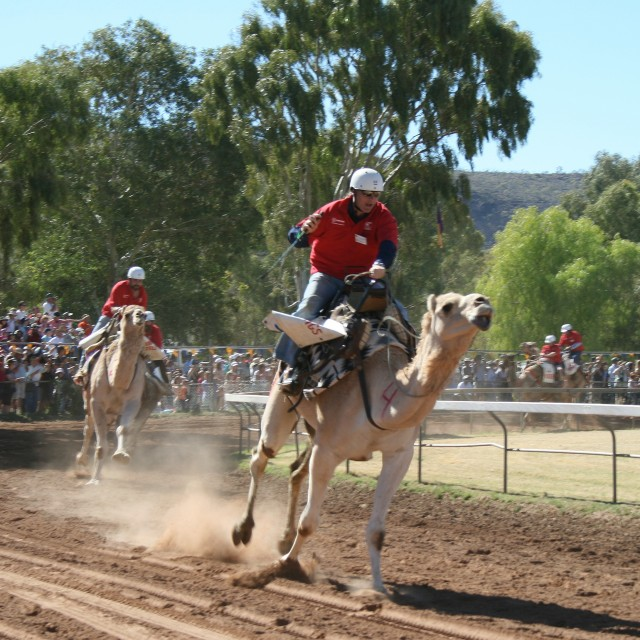Australia actually has a huge (non-native) camel population, so it stands to reason we'd race them.