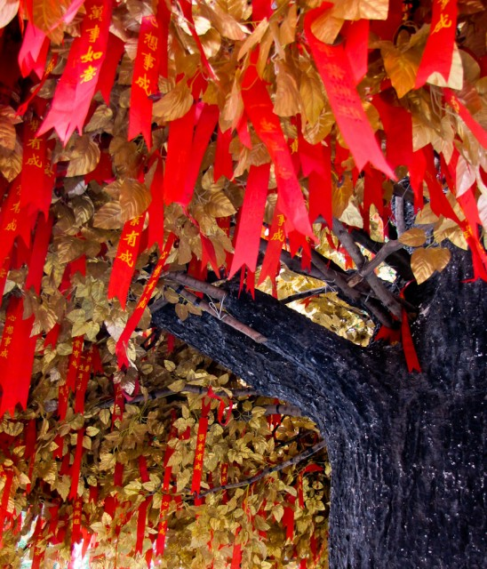 Bright ribbons contrast with autumn foliage on this tree in Fusimiao, Nanjing.