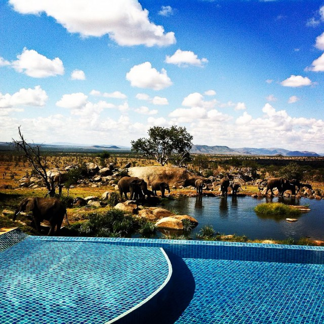 Best pool in the world? The infinity pool at the Four Seasons Serengeti overlooks an active waterhole.