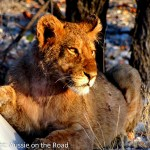 On Safari in Namibia – A Journey in Pictures