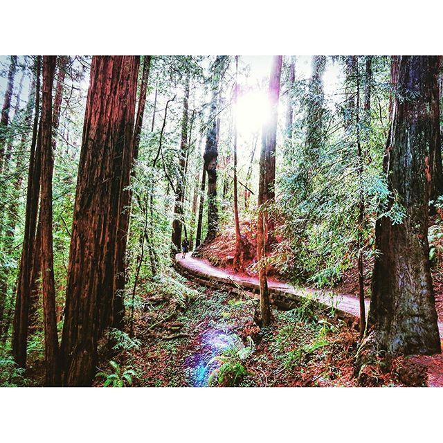 muir woods hiking
