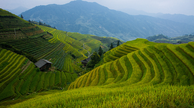 longsheng rice terraces