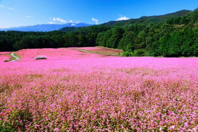 47 - Takane Ruby Bloom