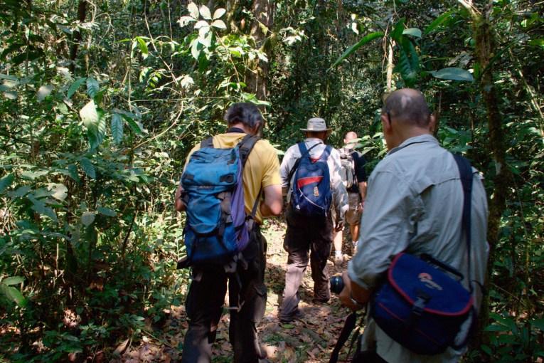 chimpanzee tracking group uganda
