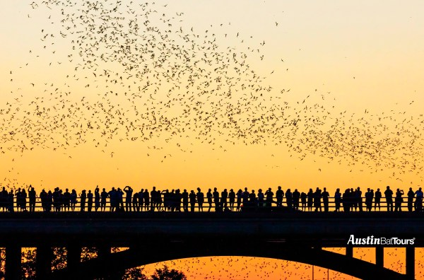 The Congress Avenue Bridge Bats take flight out for their nightl